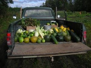 We offer a Triple H Homestead Basket. That is our CSA Project /share