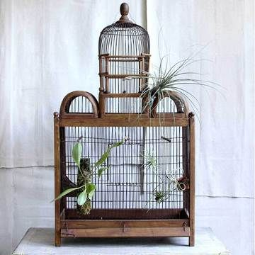 love this birdcage as habitat for air plants.  from Kim Ludy's Trampoline Vintage