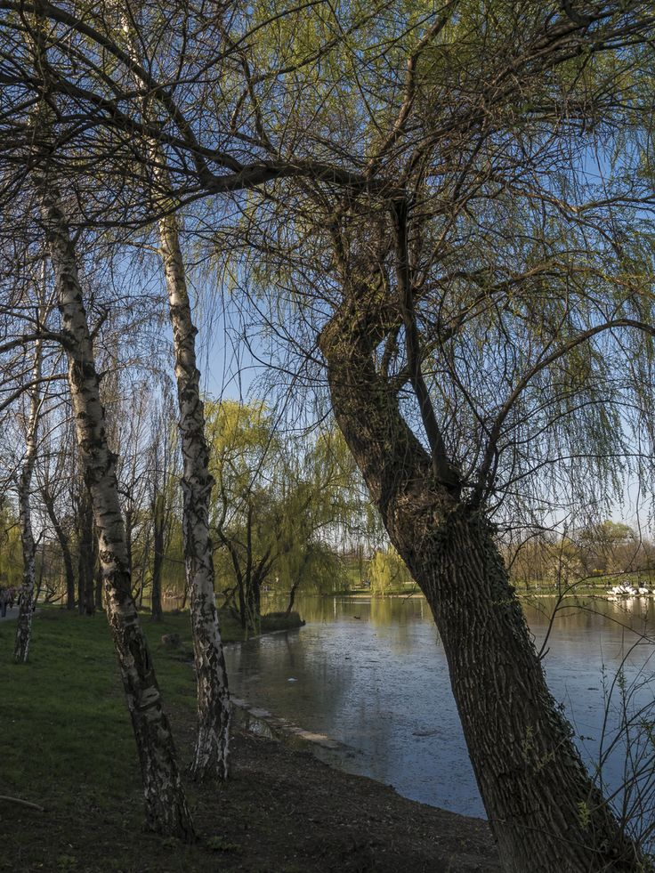 park, lake, trees, color, sky, reflections, water, willows