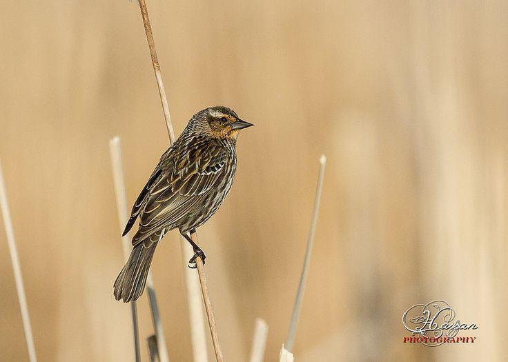 Pretty Bird, Nice pose.