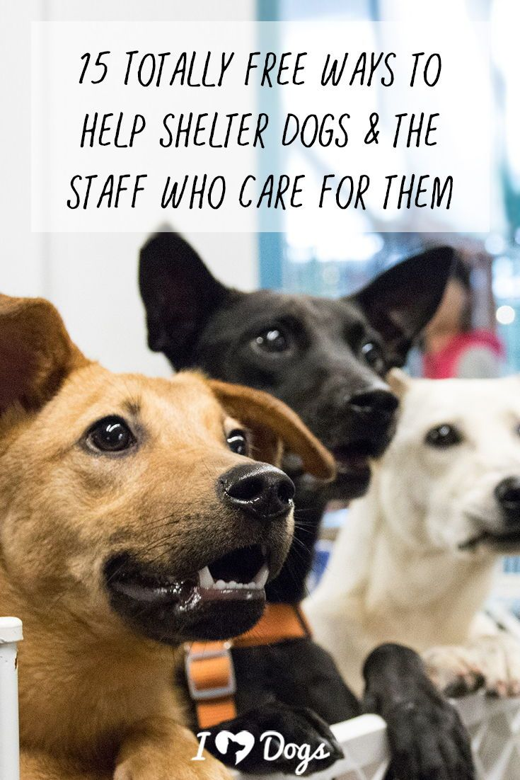 15 Totally Free Ways To Help Shelter Dogs The Staff Who Care For