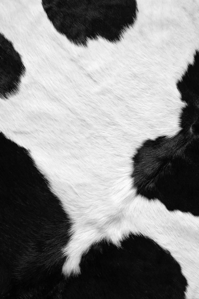 Cow Wallpapers - Wallpaper Cave