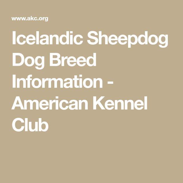 Icelandic Sheepdog Dog Breed Information - American Kennel Club