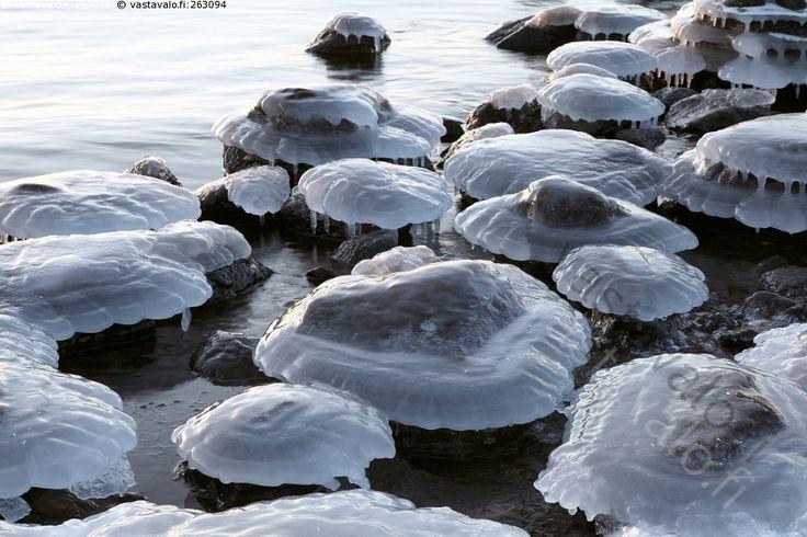 Jääsienet - jää jäinen jäässä jäätynyt jääpuikko jääpuikot lumi lumessa luminen ranta merenranta meri vesi kivi kivet talvi talvella talvinen