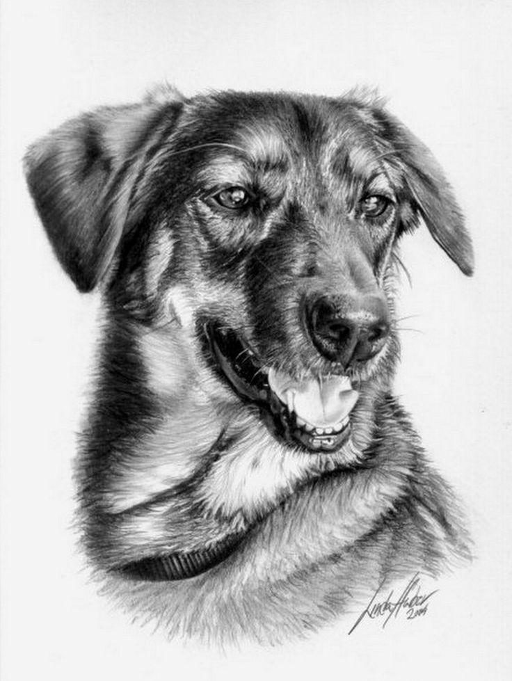 Mejores 31 imgenes de Dibujos de animales a lpiz en Pinterest