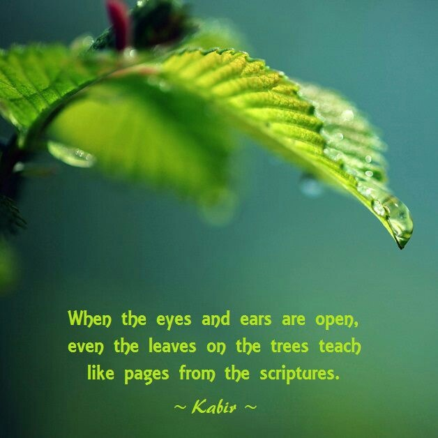 When the eyes and ears are open, even the leaves on the trees teach like pages from the scriptures.  ~ Kabir