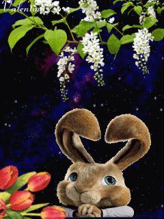 Здрасти,я кролик!