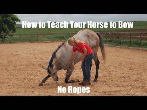 How to teach your horse to bow (no ropes)