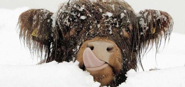25 красивых фотографий животных в снегу - http://pixel.in.ua/archives/25314