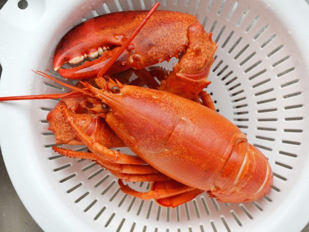 How to Cook Lobster - Cool