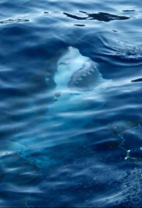 This is why I don't go in the ocean