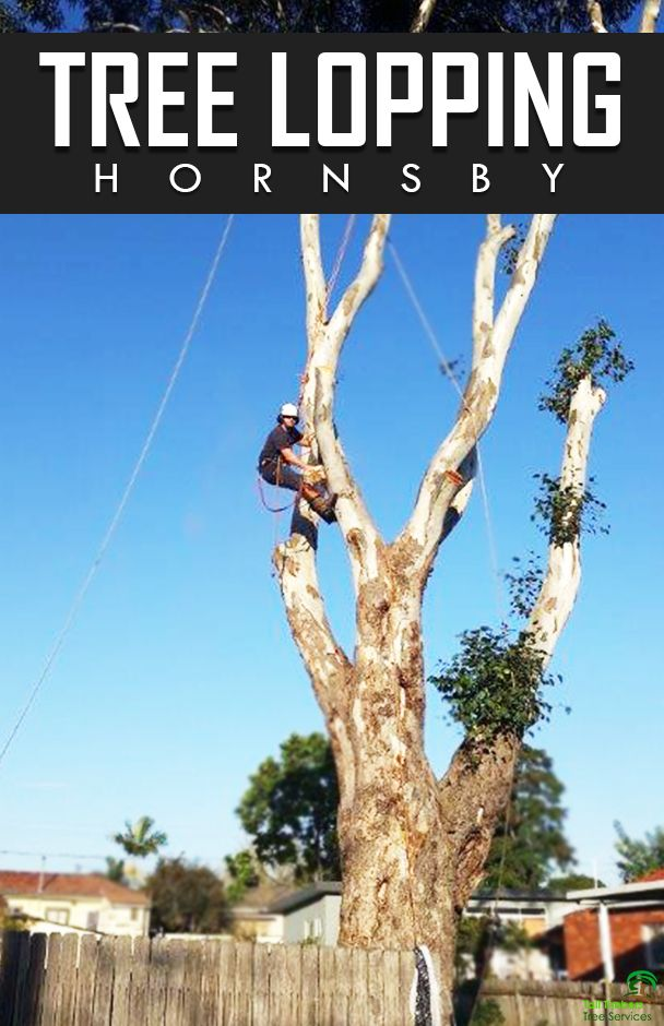 There are many ways to manage a tree or trees. It is important before you provide tree lopping or tree pruning services know the tree's biology.
