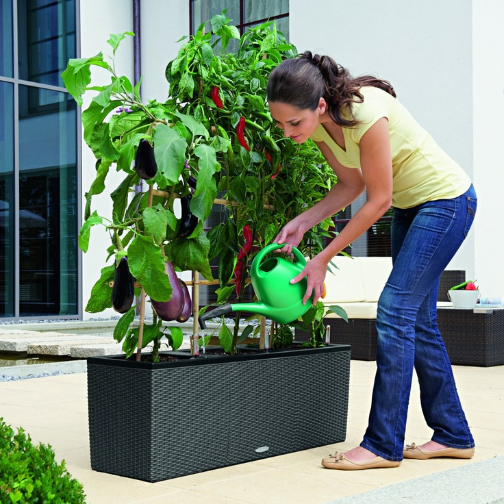 Rectangle Lechuza Trio Cottage Self-Watering Resin Planter - Indoor Planters at Simply Planters