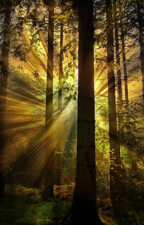 Standing in the forest with light shooting all around you.