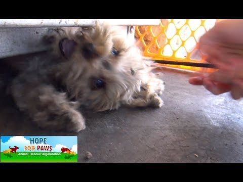 """Little dog almost squished by propane cage. """"Hope for Paws"""" to the rescue. YouTube"""