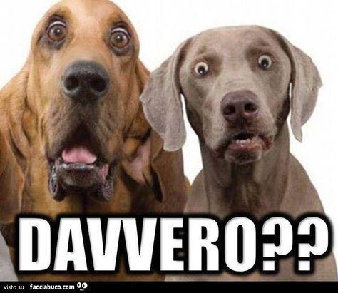 -- #ridere #ridiamo #humor #satira #umorismo #satirapolitica #sbruffonate #chucknorris