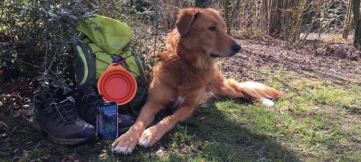 """Wandern im Teutoburger Wald - Touren gibt es mit der kostenlosen App """"Mein Teuto"""" - Wer mit Hund wandern geht, sollte immer ausreichend Wasser und eine faltbare Schüssel dabei haben - vor allem im Sommer. - © Annika Falk-Claußen"""