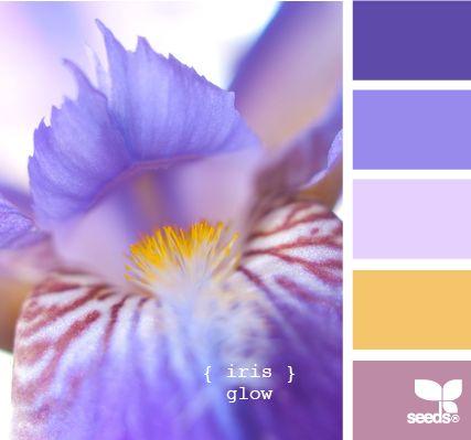 iris glowIris Glow, Design Seeds, The Colors Purple, Colors Design, Colors Combinations, Colors Palettes, Wedding Colors, Colors Boards, Colours Palettes