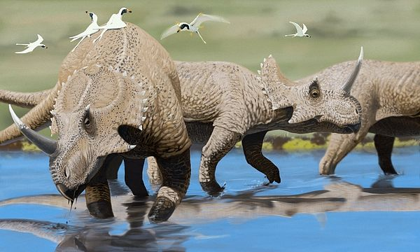 Centrosaurus by Jaime Chirinos/science Photo Library (con imágenes ...