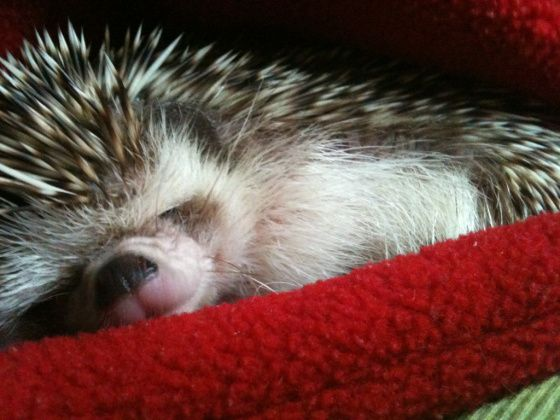 Happy napping