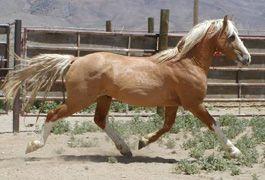 https://www.blm.gov/adoptahorse/index.php BLM wild horse and burro adoption program, bidding begins in 24 hours.