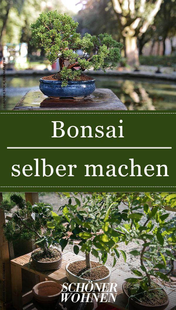 Bonsai Minibaumchen Fur Zuhause Bonsai Bonsai Pflanzen Pflanzen