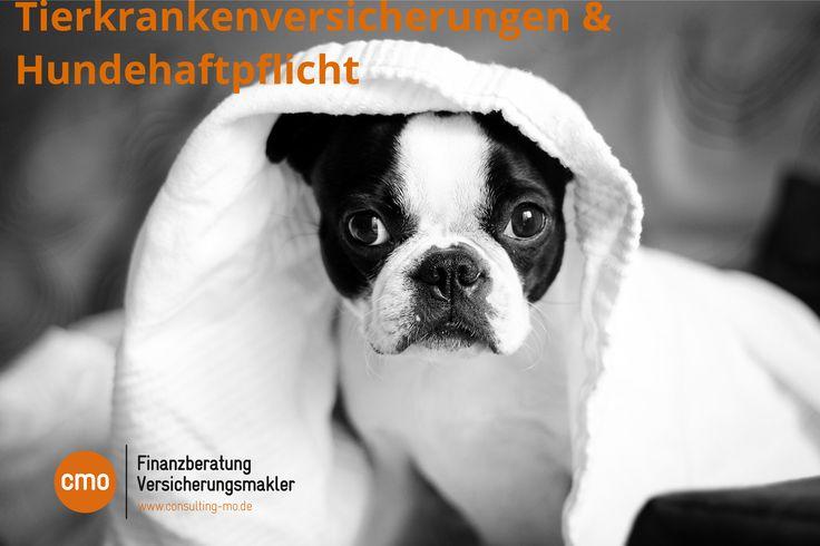 Hundhalterhafpflicht, Tierkranken, uvm. mit Onlinevergleichsrechner! Onlineabschluß möglich!