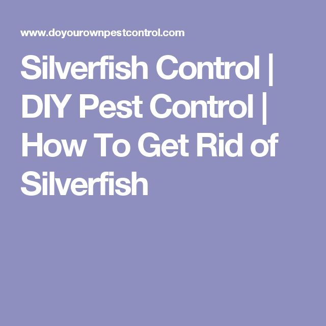 133 best images about pests on pinterest for How to get rid of silver fish