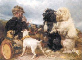 Parti Poodle History
