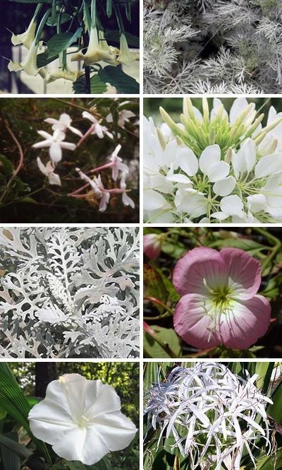Moon garden plants