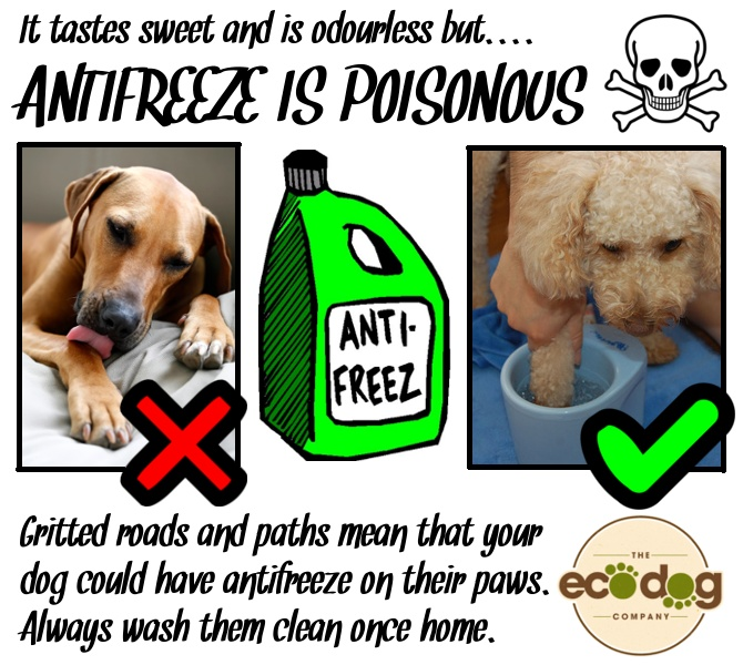 19 best images about March 16-22: Animal Poison Prevention ...