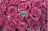 Image detail for -... of wedding flower arrangement, perfect as a background Stock Photo