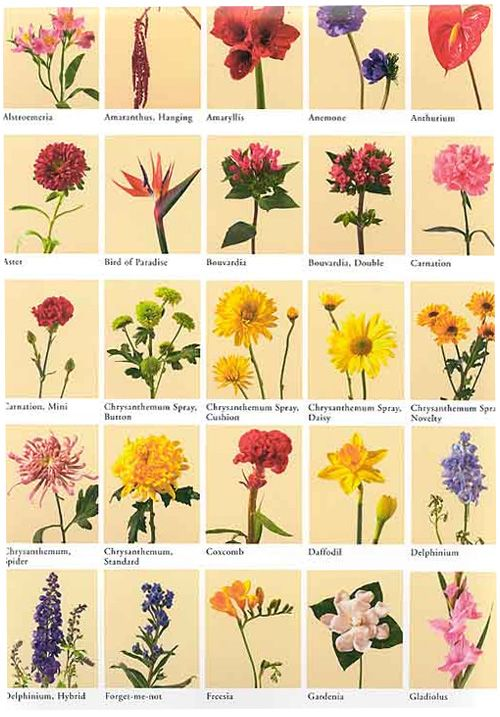 best flowers and their meanings ideas on   flower, Beautiful flower