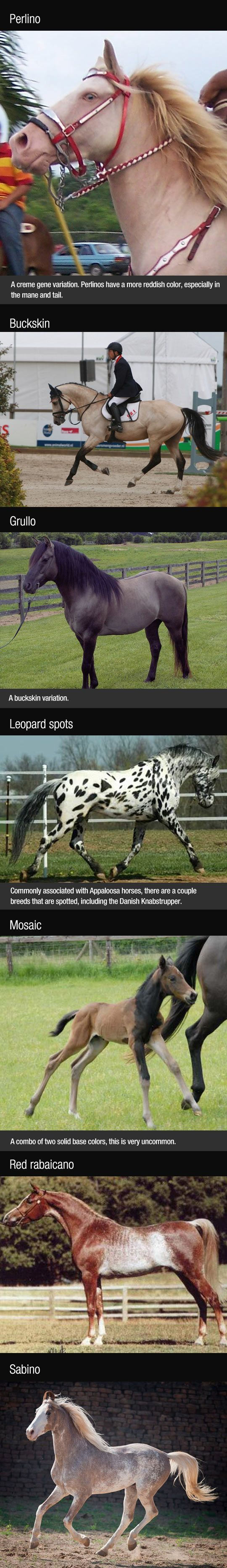 Breathtaking Horse Colors