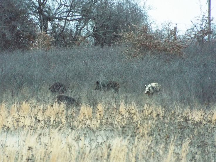 Texas Hunting Lease