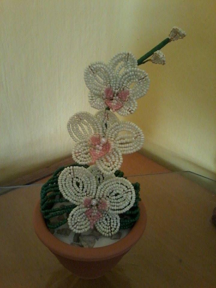 Orchidea 6