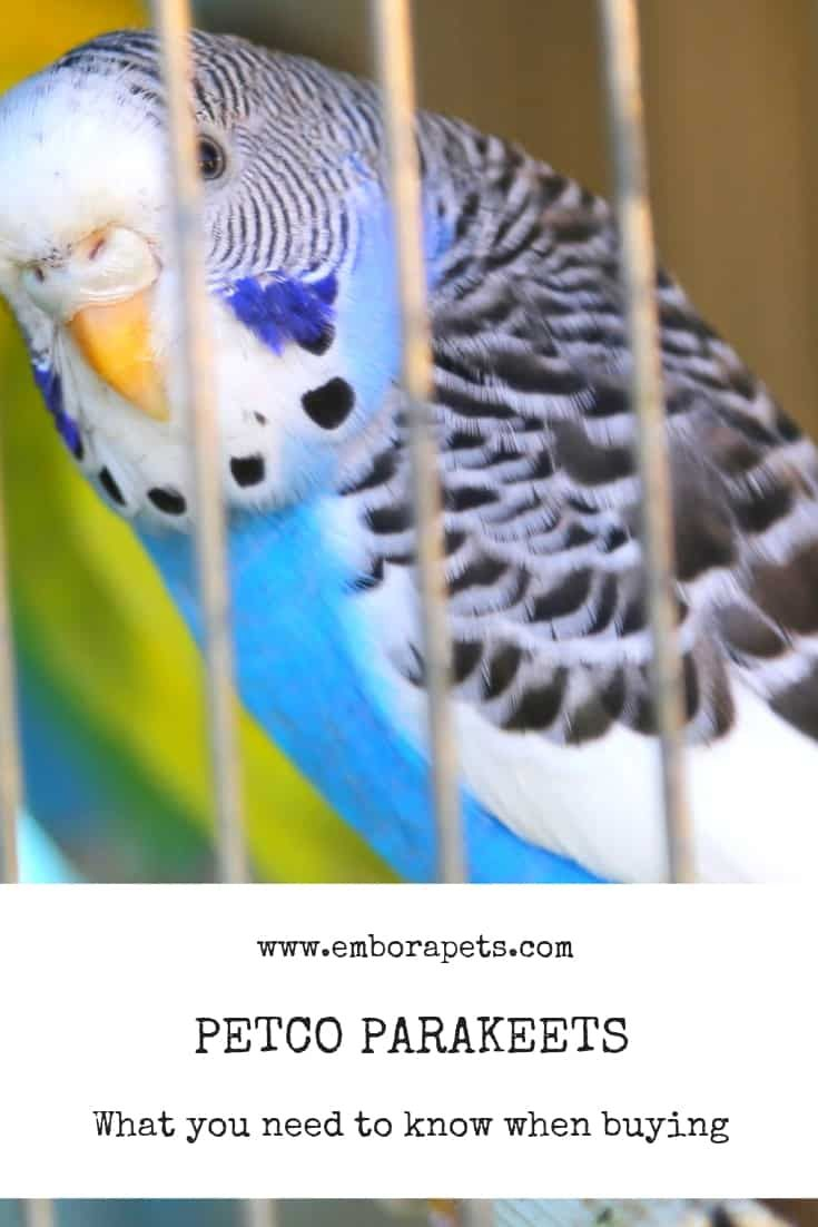 Petco Parakeets 9 Things To Know Before You Buy Embora Pets Parakeet Care Fancy Parakeet Parakeet Cage