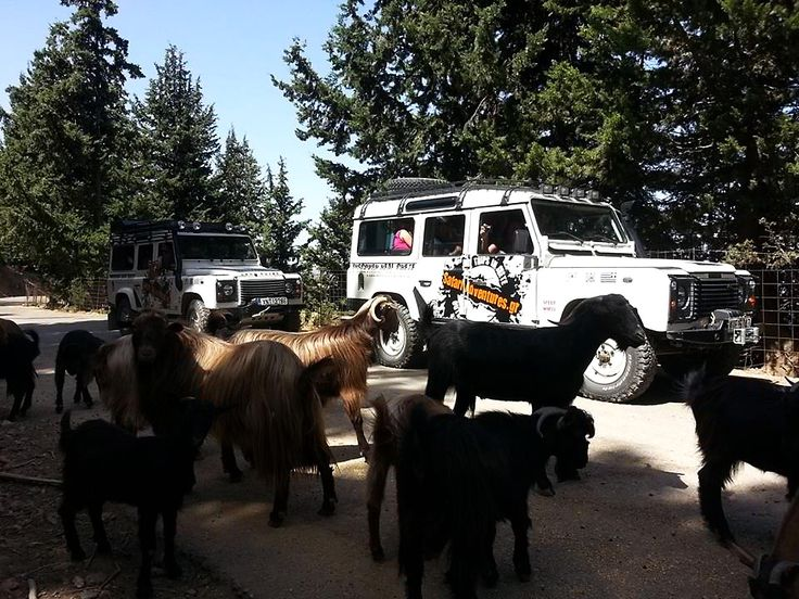 Meeting the goats in a Jeep Safari tour.