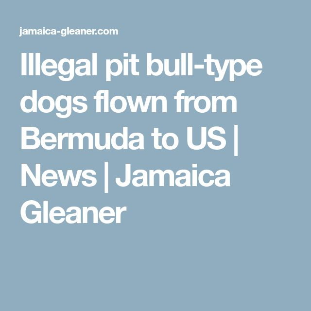 Illegal pit bull-type dogs flown from Bermuda to US | News | Jamaica Gleaner