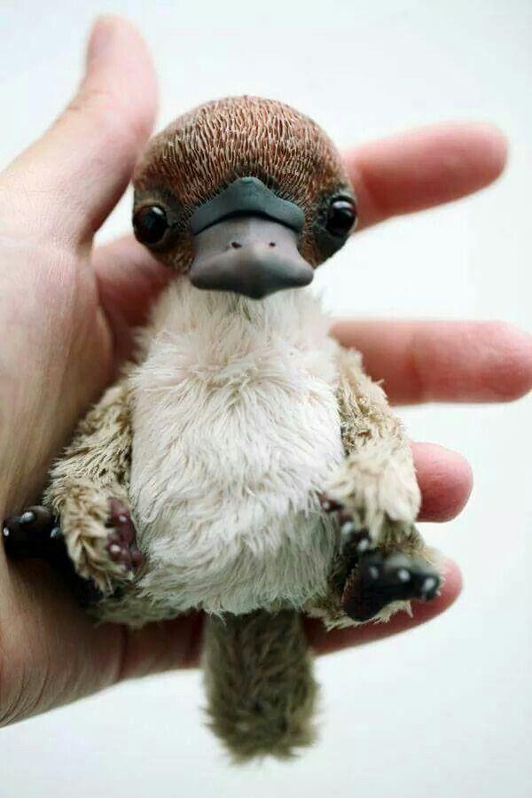 Kacsacsőrű emlős bébi