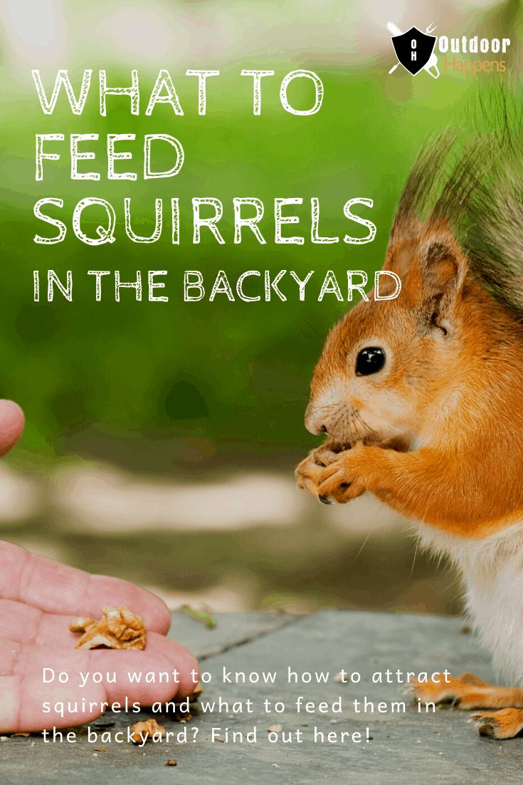 What to Feed Squirrels in Backyard How To Attract
