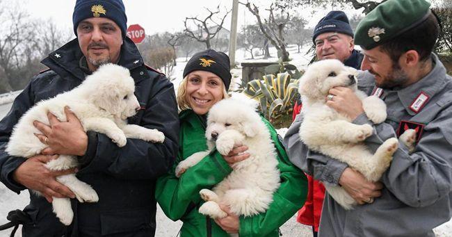 Hotel Rigopiano, salvati dalle macerie i cuccioli dei cani Lupo e Nuvola