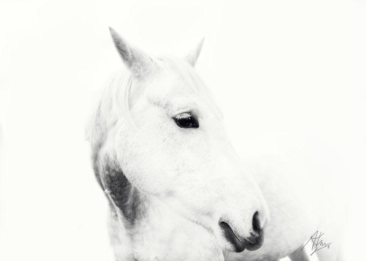 #Equine Fine Art Print    White horse