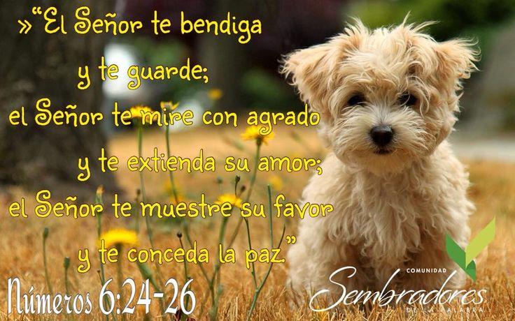 El Señor te bendiga, frases espirituales, #frasesdelabiblia #sembradoresdelapalabra #comunidadcatolica #comunidadsempal #rccdecolombia #rccbogota http://www.sembradoresdelapalabra.com/