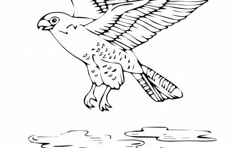 Flying Falcon Coloring Pages