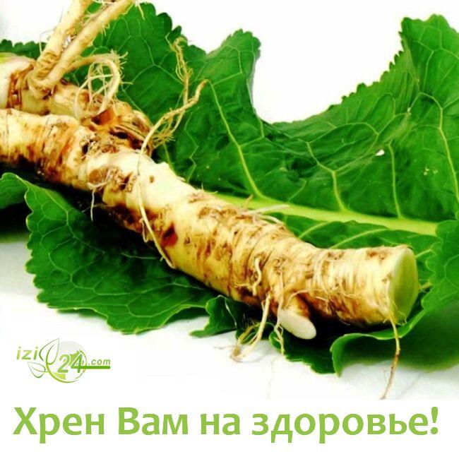 ХРЕН! СДЕЛАЙТЕ – НЕ ПОЖАЛЕЕТЕ  Хрен – единственное растение, способное вытягивать соль через поры кожи.    Избавиться от всей соли, которая накопилась в организме и может привести к солевым болезненным отложениям, помогут листья хрена.    Напоминаю проверенный и безотказный рецепт. Возьмите свежие крупные листья хрена – 2 шт. Перед сном окуните их с двух сторон кипяток и сразу положите на спину, захватывая шею. Обвяжите тканью. Возможно легкое жжение, но боли нет.    Утром осторожно снимите…
