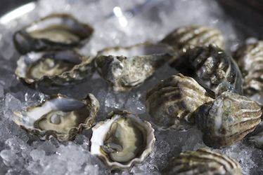 Kumamoto Oysters. My favorite oyster (eaten raw). Petite, sweet and delicately flavored. Originally from Kyushu, Japan, Kumamotos are widely raised in shellfish farms in Washington State (Puget Sound) and Northern California (Humbolt Bay).