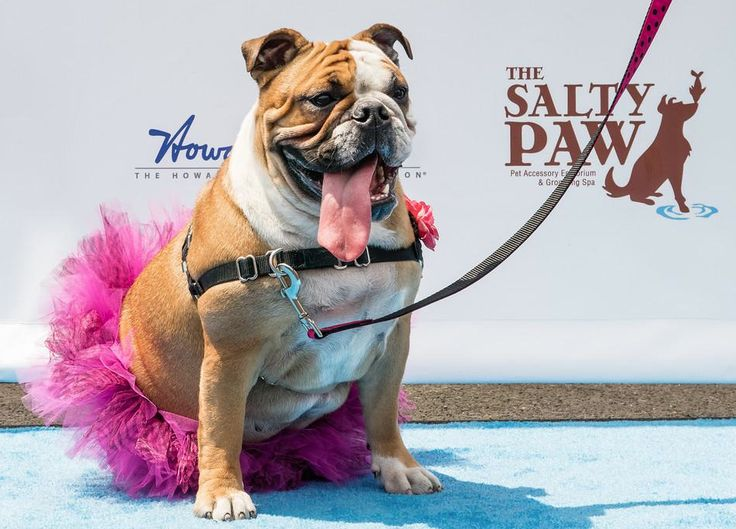 """1st Annual """"Strut, Swagger & Slobber"""" Fundraising Event at the South Street Seaport in NYC."""