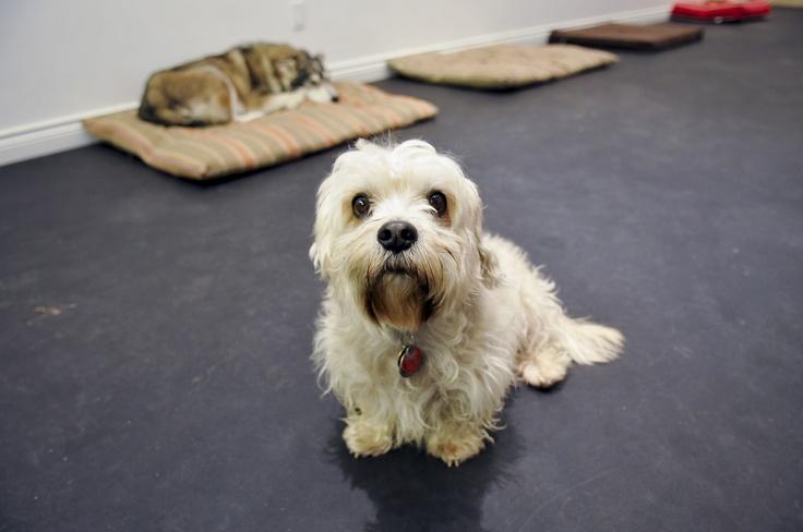 A Leg Up Dog Walking  Google Business View Toronto  www.richteamedia360.com  #GoogleMaps