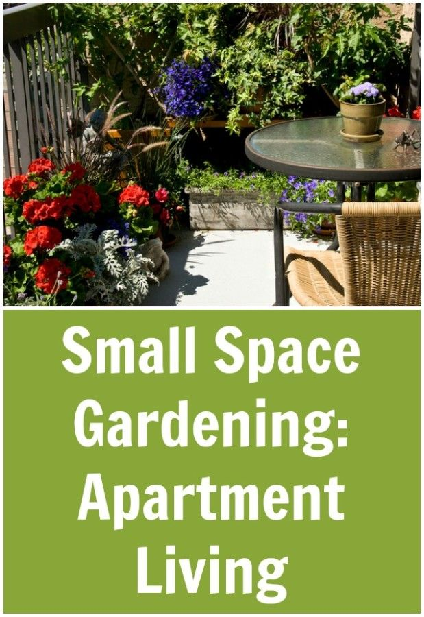 Small Space Gardening : Apartment Living